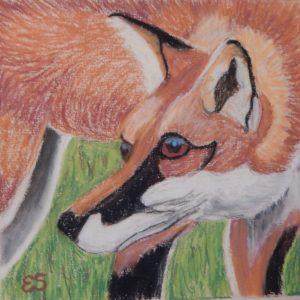 Cherry-eating Fox