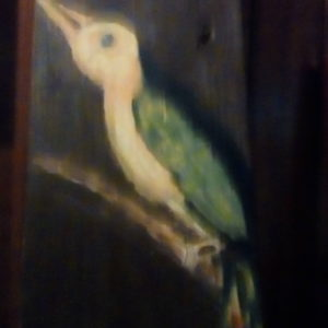 Whidah Bird of Africa