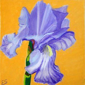 Single Purple Iris